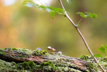 mini champignons sur Tania Perneel