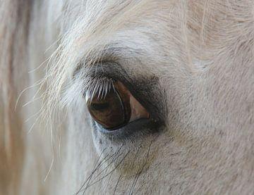 Paardenoog schimmel van Ilona Bredewold