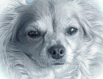 Hond Portret  van Kimberly Galjaard
