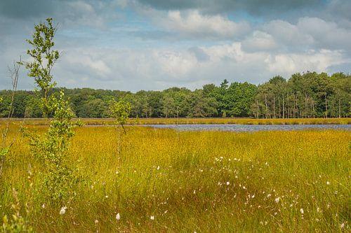 Nationaal Park Dwingelderveld van