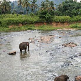 Elefanten von Sri Lanka sur Roland de Zeeuw fotografie