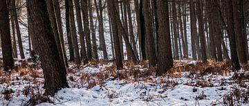 Alleen in het Bos... - Rozendaal van Maurice Weststrate