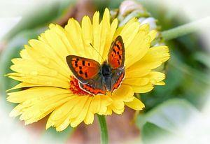 Blume mit Schmetterling von Gonnie van Hove