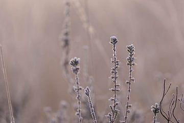 Heideflächen an einem kalten Morgen von Tania Perneel