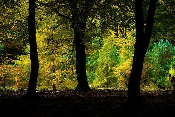 Kleuren van het Speulderbos