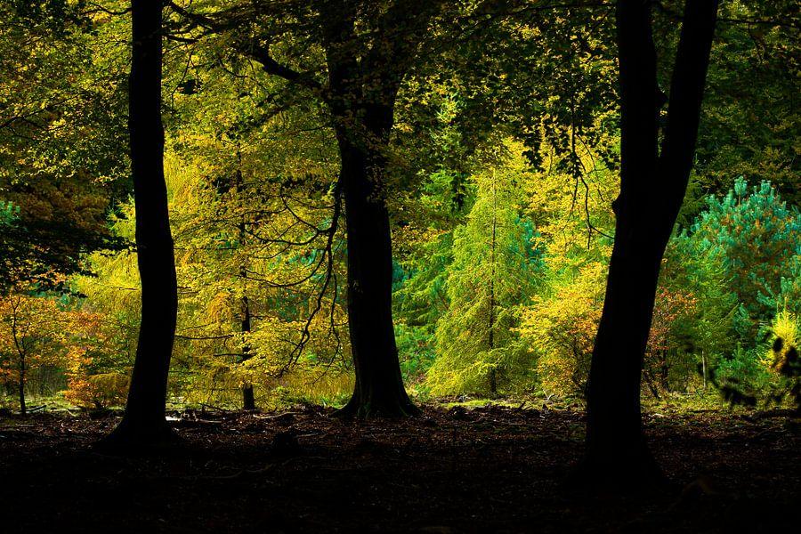 Kleuren van het Speulderbos van Nando Harmsen