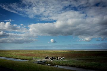 Koeien grazen in de kwelders van Groningen van Bo Scheeringa