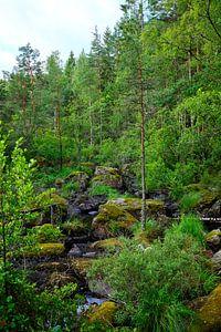 Zweeds landschap 012