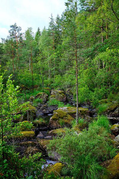 Zweeds landschap 012 sur Geertjan Plooijer