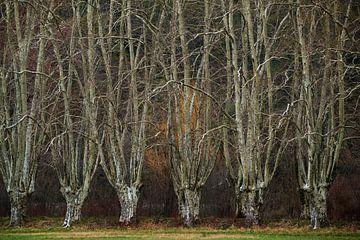 Versteckte Wälder Nr. 3 von Lars van de Goor