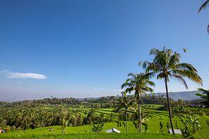Twee hutten in weelderige groene rijstvelden in Sidemen, Bali, Indonesië