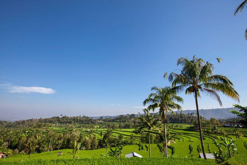 Twee hutten in weelderige groene rijstvelden in Sidemen, Bali, Indonesië van Tjeerd Kruse