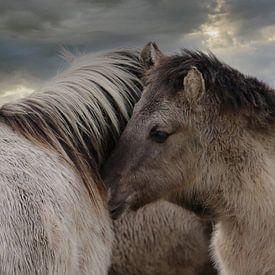 Paardjes van Yvonne Blokland