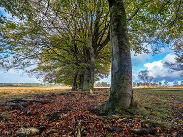 Bomen op de Veluwe von Dirk van der Plas