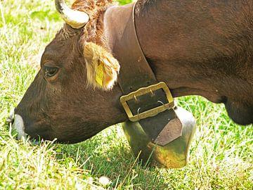 Grazende koe van Rinke Velds