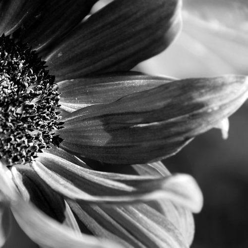 FLOWER - BLACK AND WHITE