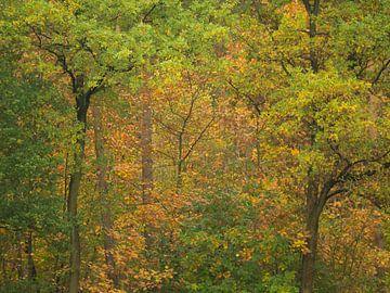 Herfstpatronen van Wendy Drent