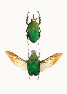 Rariteitenkabinet_Insecten_02 (gezien bij vtwonen)