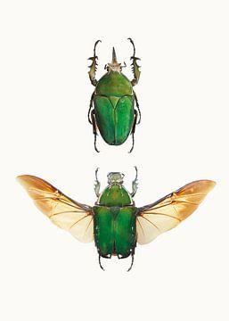 Rariteitenkabinet_Insecten_02 van