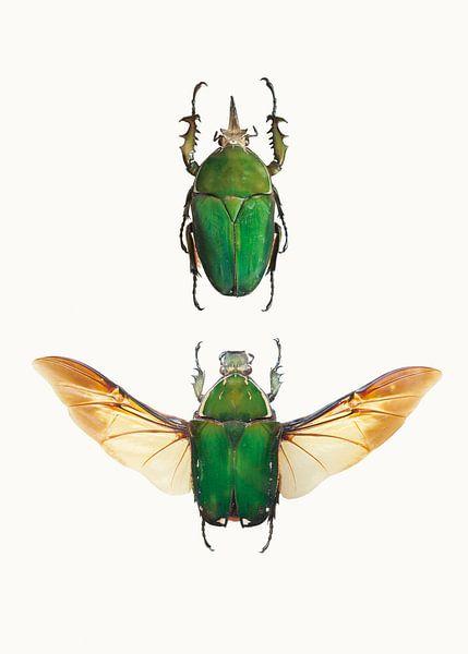 Rariteitenkabinet_Insecten_02 (gezien bij vtwonen) van Marielle Leenders