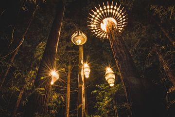 Rotorua Redwoods, Nieuw-Zeeland van Tom in 't Veld