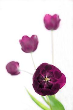 Tulpen von Yorda Cornelissen