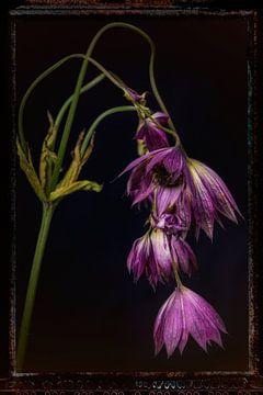 Oude Bloemen 1 van Henk Leijen