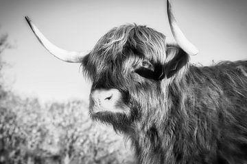 Porträt eines schottischen Highlanders von Wendy Tellier - Vastenhouw