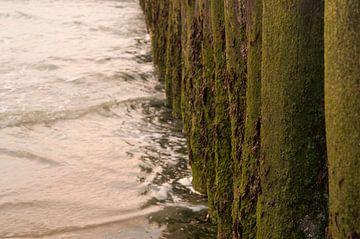 groene strandpalen in Zeeland von Moïse Verzuu