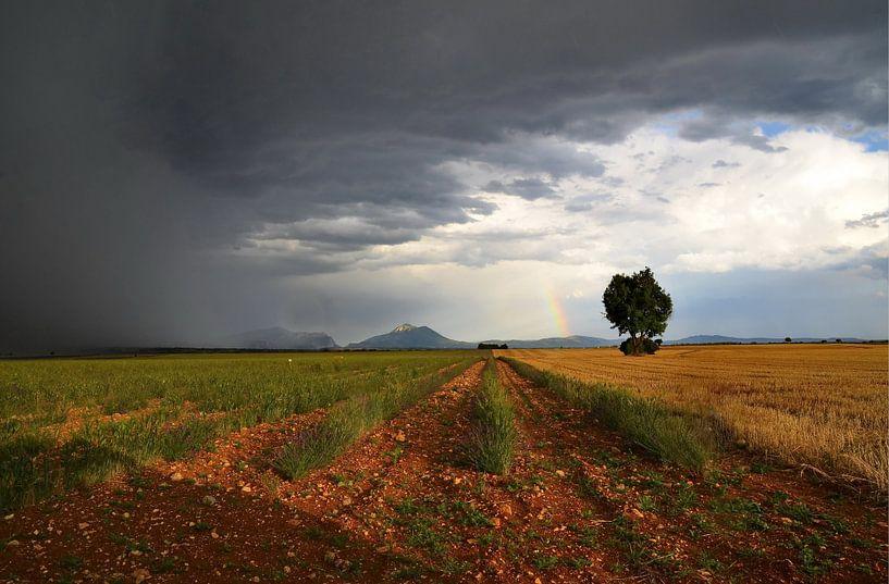 Ca y est, il pleut! van Georges Rudolph