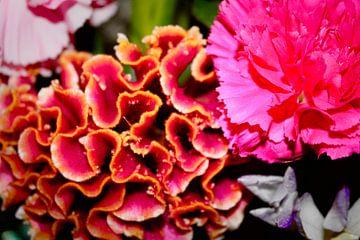 anjer en koraalbloem, roze en geel van Coco Korse