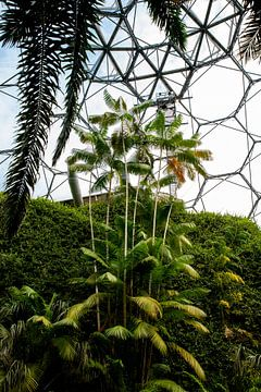 Tropical Palm jungle van Pictorine