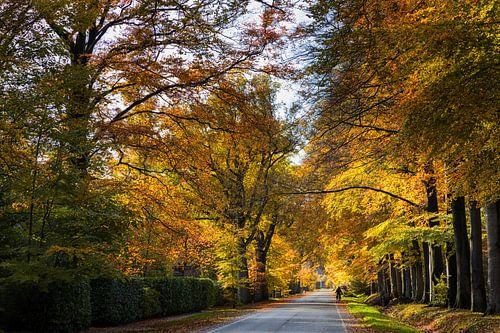 Schilderachtige herfst laan van