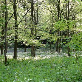 Witte lente sur Lotte Veldt