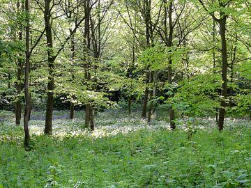 Witte lente van