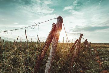 Holzpfosten in Tomatenfelder in der Abendsonne von Besa Art