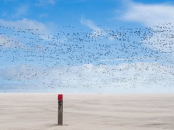 Vogelvlucht in zandstorm