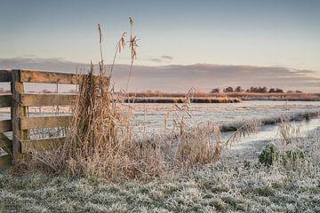 Winterfrost im Polder von Rossum-Fotografie