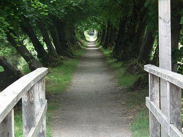 Natuurlijke tunnel van El'amour Fotografie