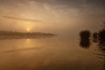 Goudkleurige zonsopkomst Dwingelderveld von Anneke Hooijer