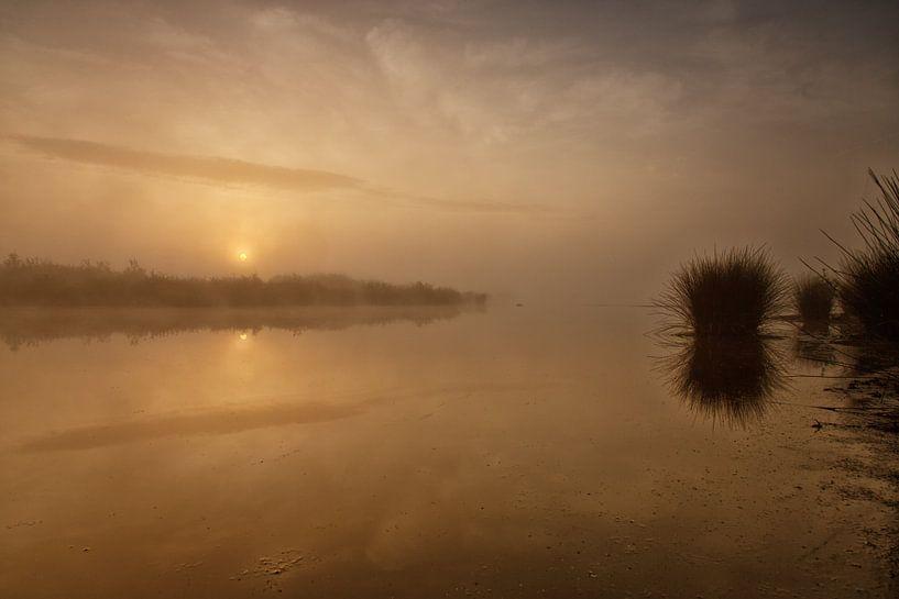 Goudkleurige zonsopkomst Dwingelderveld sur Anneke Hooijer