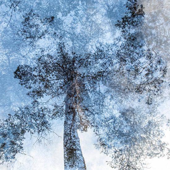 Bomen dromen (nummer 1 van serie van 5)