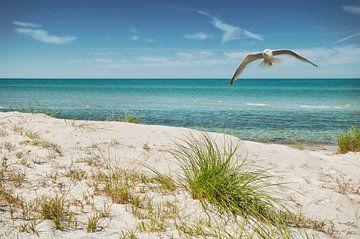 Urlaub an der Ostsee von Dieter Beselt