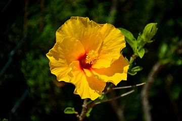 Gelbe Blume mit unscharfem Hintergrund von LuCreator