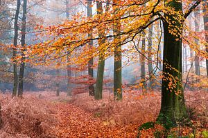Altijd herfst van Tvurk Photography