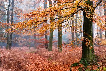 Immer Herbst von Tvurk Photography