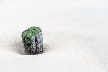 Solum von B-Pure Photography