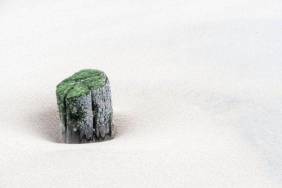 Solum van B-Pure Photography