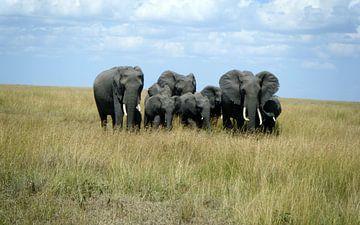 Olifanten Masai Mara Kenia von Gerrit  De Vries