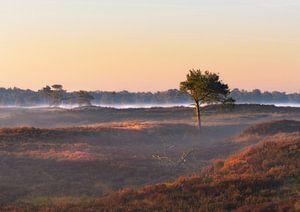 Spel van licht en schaduw op Kalmthoutse Heide